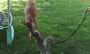 Leo the Cat and Wild Deer are Best Buds