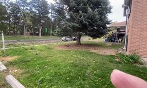 Wild Winds Uproot a Huge Tree in Utah