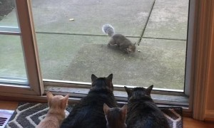 Kitties Watch on as Squirrels Enjoy Their Breakfast