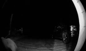 Bear Rings Doorbell During Late Night Visit