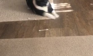 Kitty Goes Crazy on Q-Tips
