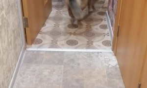 Kitty Drags Dog Into Kitchen