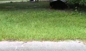 Bold Kitty Has Bear on the Run