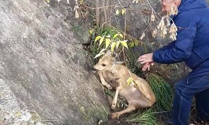 Saving a Deer Stuck in a Concrete Cone