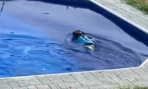 Excited Pooch Is Filled with Joy for a Swim