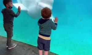 Kid Meets a Beluga Whale at Mystic Aquarium