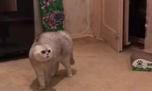 Concerned Kitty Makes Peculiar Sounds