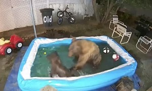 Bears Have Themselves a Pool Party