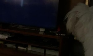Dog Doesn't Like Moving TV Logo