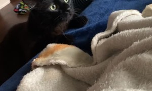 Seemingly Vicious Kitty Ambush Turns Heartfelt Between Buds