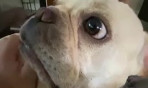 Dog gets jealous of other dog's attention