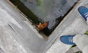 Rescuing a Fox from Deep Vat of Water