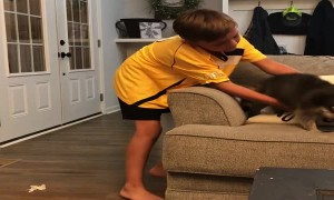 Playful Raccoon Leaps from Couch to Kid