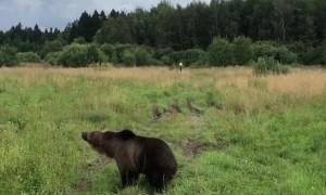 Big Bear Hunting Hovering Drone
