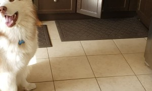 Smart Husky Learns How to Close Kitchen Cabinets