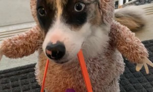 Dressed up Dog Gets Halloween Treat