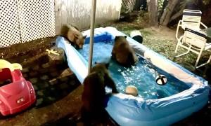 Bear Family Has Late Night Pool Playtime