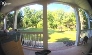 Dog Discovers Doorbell Cam