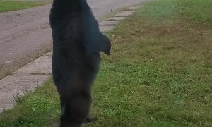 Bear Stands Right Outside the Door