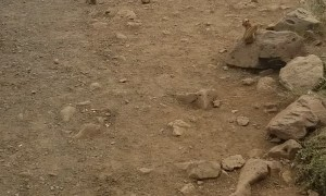 Chipmunks Join in for Lunch at Roadside Stop