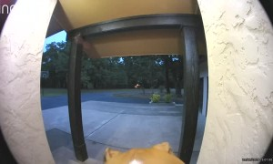 Dog Tests Out New Doorbell