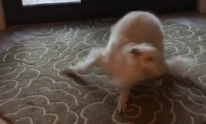 Seriously Excited Doggy Spins on the Spot