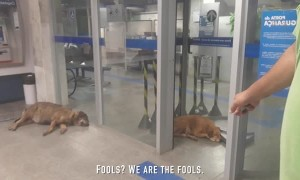 Dogs Take Refuge in Bank to Escape Heat Wave