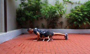 Beagle Puppy Joins Owner's Workout