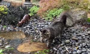 Cat Crossing Indoor Stream Not Fond of Water