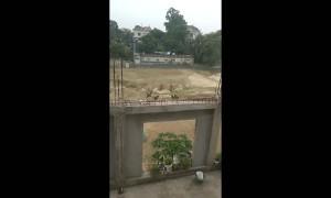 Bunch of Birds Cause a Ruckus in Bangladesh