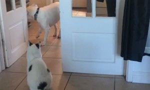 Doggy Can't Get Past Territorial Kitty
