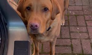 Pups Help Unpack the Groceries