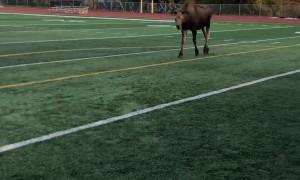 Moose Shows Off Soccer Skills