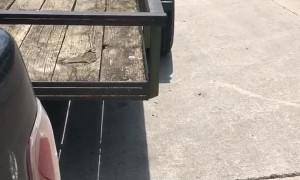 Forklift Load Flattens Trailer