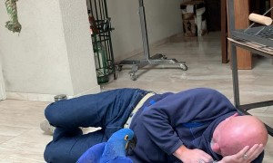 Macaw Loves to Wrestle With its Person