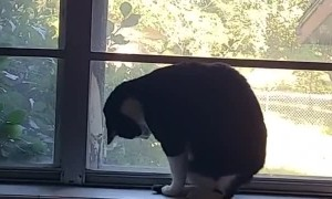 Cat Trying to Catch Tail Bonks Head