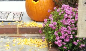 Squirrel Creates a New Home in Halloween Pumpkin