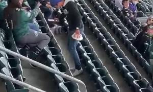 Pigeon Lands on Eagles Fan Shoulder