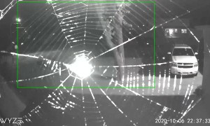 Time-Lapse of Spider Building a Web