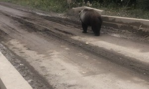 Bear Bluff Charges Fishermen while Crossing Bridge