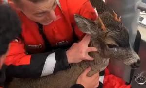 U.S. Coast Guard rescues distressed deer off Alaskan Coast