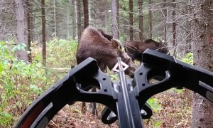 Hunter Experiences Incredible Encounter