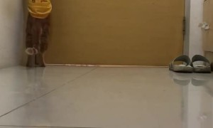 Clever Kitty Can Operate Door Handle
