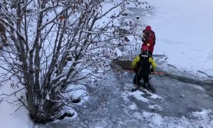 Firefighters rescue deer from icy lake in Colorado