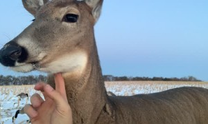 North Dakota Duck Hunters Spend Afternoon with Friendly Doe