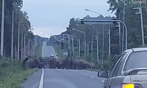 Herd of Elephants Have Right of Way