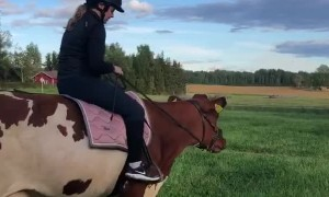 Girl Takes Pet Cow for a Gallop