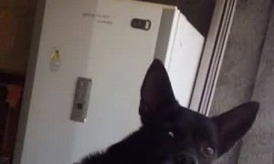 Arguing People Make Pup Nervous