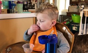 Toddler Nodding off Drops Snacks