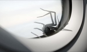 Giant Spider on a Plane